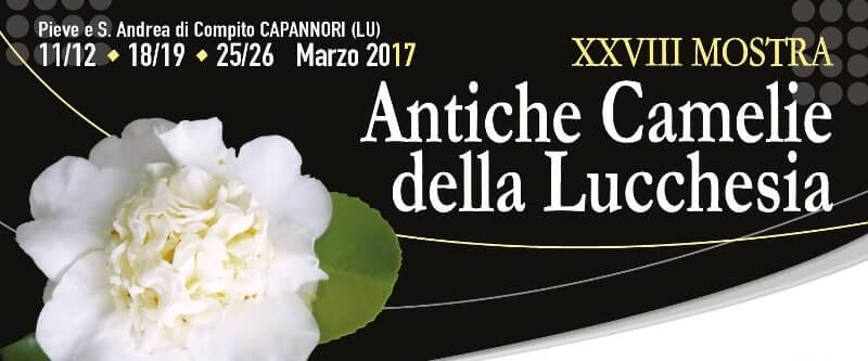 Camellia Exhibit in Lucca, Tuscany