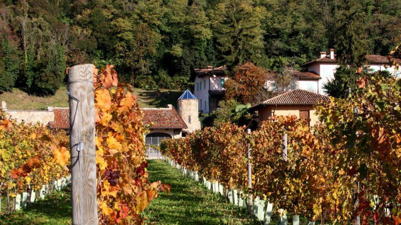 Azienda La Bellanotte Friuli Venezia Giulia