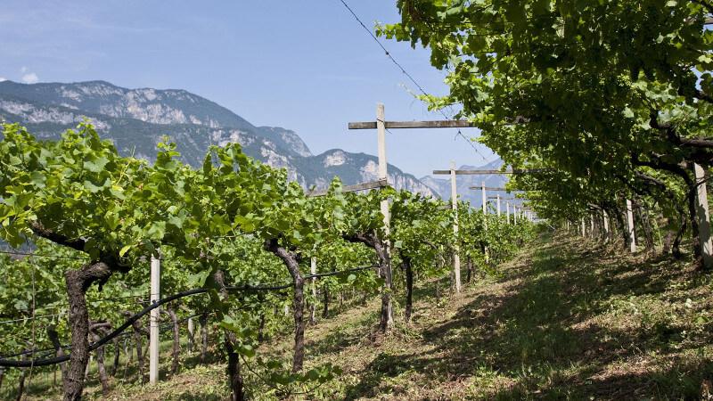 Cesconi Winery Italy