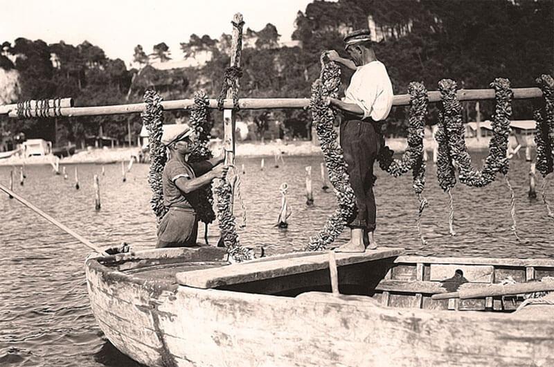 Historic mussel farming in Liguria