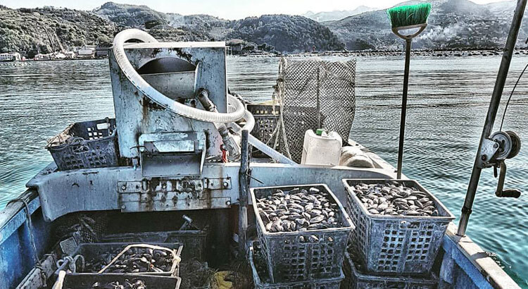 An Exclusive Tour in La Spezia's Oyster Farms