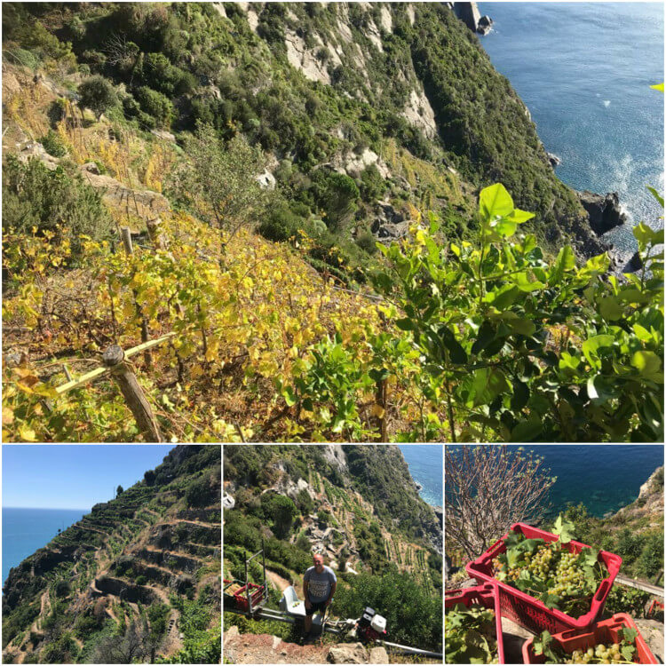 heroic winemaking cinque terre